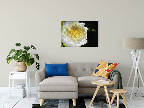 Floral Nature Photograph Glowing Rose 2 - Fine Art Canvas - Home Decor Unframed Wall Art Prints