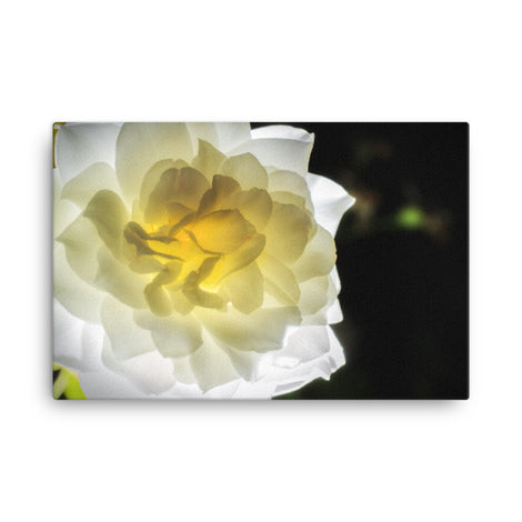 Glowing Rose 2 Floral Nature Canvas Wall Art Prints