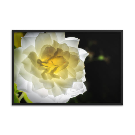 Glowing Rose 2 Floral Nature Photo Framed Wall Art Print