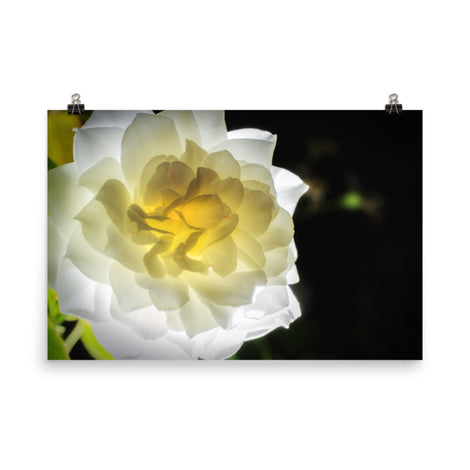 Glowing Rose 2 Floral Nature Photo Loose Unframed Wall Art Prints
