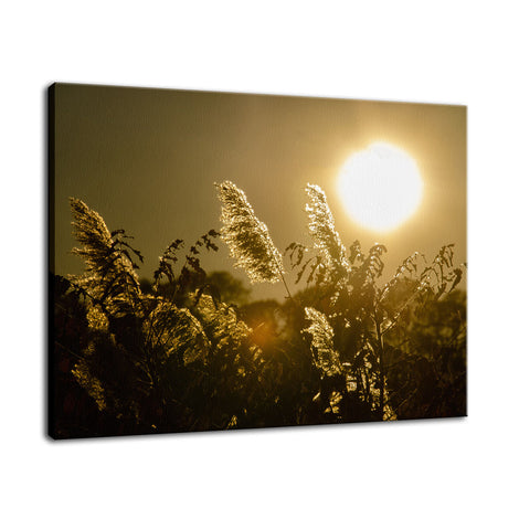 Golden Marsh Weeds Botanical / Nature Photo Fine Art Canvas Wall Art Prints