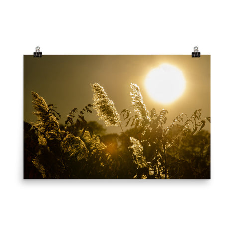 Golden Marsh Weeds Botanical Nature Photo Loose Unframed Wall Art Prints