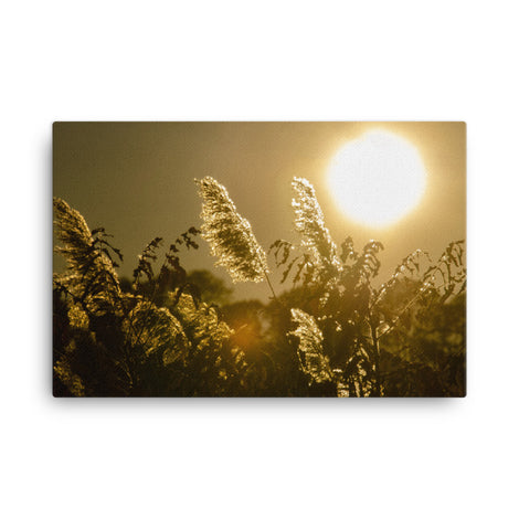 Golden Marsh Weeds Floral Nature Canvas Wall Art Prints