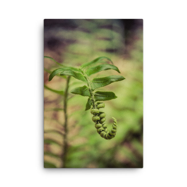 Growth of the Forest Floor Botanical Nature Canvas Wall Art Prints  - PIPAFINEART