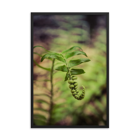 Growth of the Forest Floor Botanical Nature Photo Framed Wall Art Print