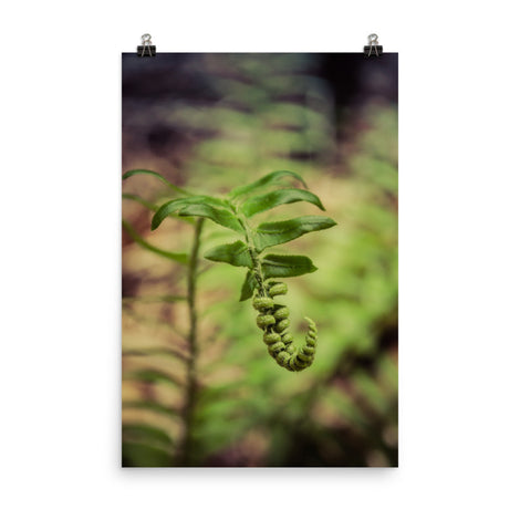 Growth of the Forest Floor Botanical Nature Photo Loose Unframed Wall Art Prints