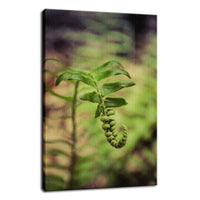 Growth of the Forest Floor Botanical / Nature Photo Fine Art Canvas Wall Art Prints  - PIPAFINEART