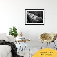 "Gull King Animal / Wildlife Black and White Photograph Fine Art Canvas & Unframed Wall Art Prints 24"" x 36"" / Classic Paper - Unframed - PIPAFINEART"