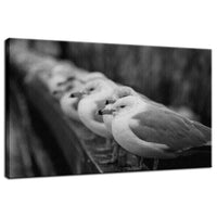 Gull King Animal / Wildlife Black and White Photograph Fine Art Canvas & Unframed Wall Art Prints  - PIPAFINEART