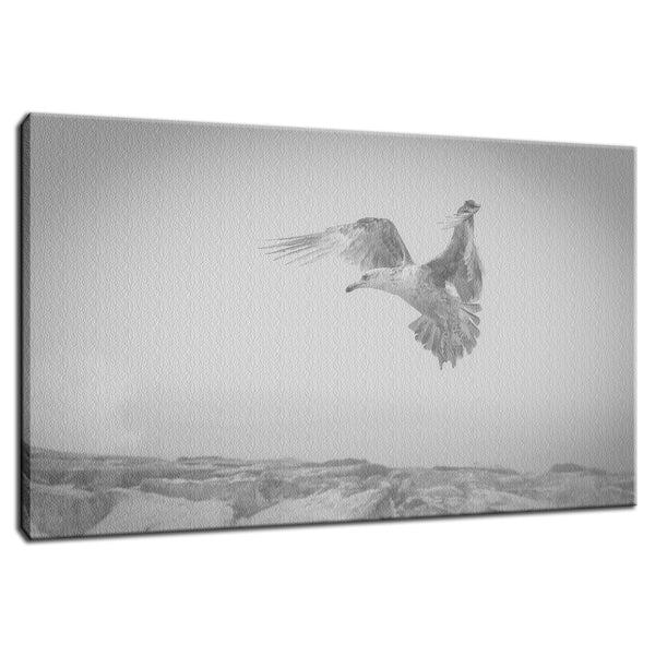 Gull in the Mist - Black and White Animal / Wildlife Photograph Fine Art Canvas & Unframed Wall Art Prints  - PIPAFINEART
