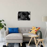 "Gurdy on Porch Animal / Dog Black & White Fine Art Canvas & Unframed Wall Art Prints 20"" x 30"" / Canvas Fine Art - PIPAFINEART"