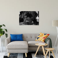 "Gurdy on Porch Animal / Dog Black & White Fine Art Canvas & Unframed Wall Art Prints 24"" x 36"" / Canvas Fine Art - PIPAFINEART"