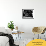 "Gurdy on Porch Animal / Dog Black & White Fine Art Canvas & Unframed Wall Art Prints 20"" x 24"" / Classic Paper - Unframed - PIPAFINEART"