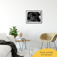 "Gurdy on Porch Animal / Dog Black & White Fine Art Canvas & Unframed Wall Art Prints 20"" x 30"" / Classic Paper - Unframed - PIPAFINEART"