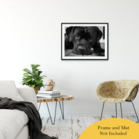 "Gurdy on Porch Animal / Dog Black & White Fine Art Canvas & Unframed Wall Art Prints 24"" x 36"" / Classic Paper - Unframed - PIPAFINEART"