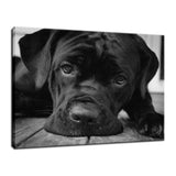 Gurdy on Porch Animal / Dog Black & White Fine Art Canvas & Unframed Wall Art Prints  - PIPAFINEART