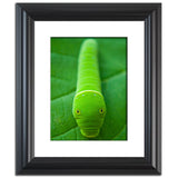 Hidden Caterpillar Animal / Wildlife Photograph Fine Art Canvas & Unframed Wall Art Prints  - PIPAFINEART
