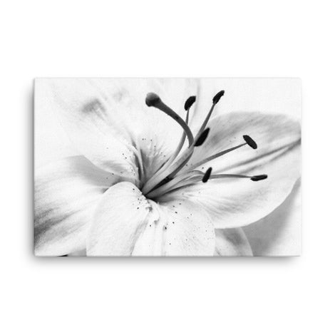 High Key Lily Black and White Floral Nature Canvas Wall Art Prints