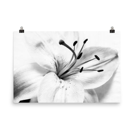 High Key Lily Floral Nature Photo Loose Unframed Wall Art Prints