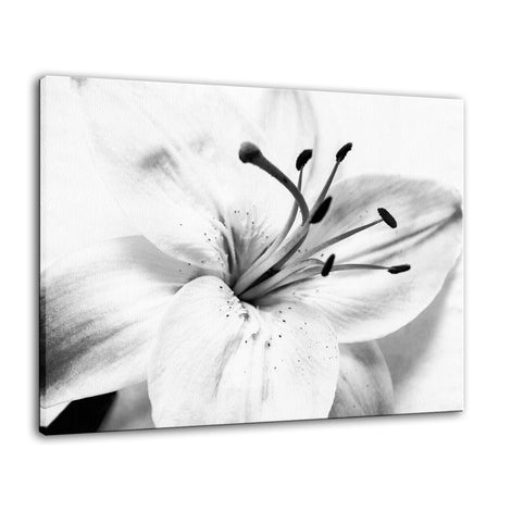 High Key Lily Black & White Nature / Floral Photo Fine Art Canvas Wall Art Prints