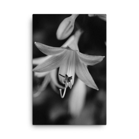 Hosta Bloom Black and White Floral Nature Canvas Wall Art Prints