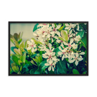 Indian Hawthorn Shrub in Bloom Colorized Floral Nature Photo Framed Wall Art Print  - PIPAFINEART