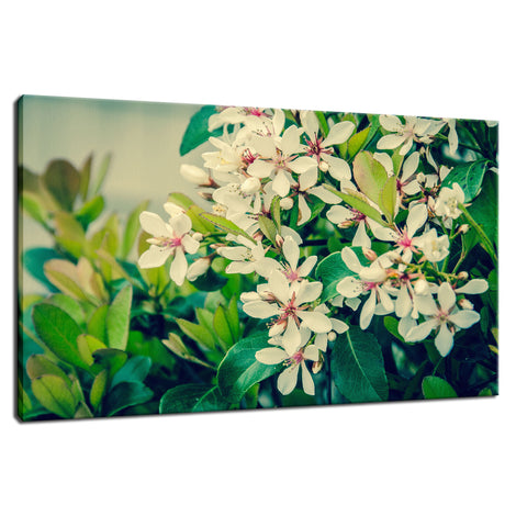 Indian Hawthorn Shrub in Bloom Colorized Floral Photo Fine Art Canvas Wall Art Prints