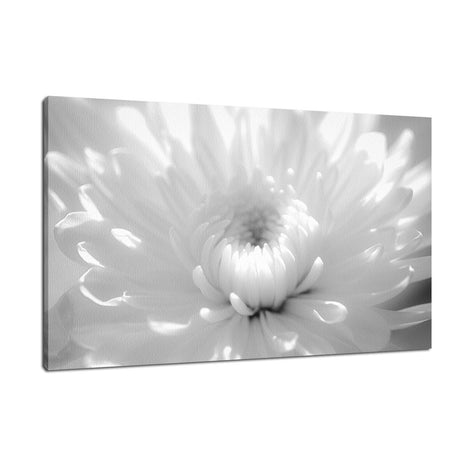 Infrared Flower 2 Nature / Floral Photo Fine Art Canvas Wall Art Prints