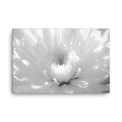 Infrared Flower 2 Black and White Floral Nature Canvas Wall Art Prints