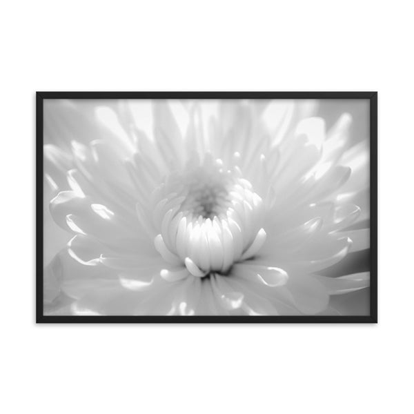 Infrared Flower Black and White Floral Nature Photo Framed Wall Art Print  - PIPAFINEART