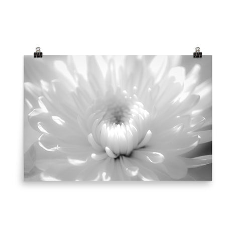 Infrared Flower 2 Black and White Floral Nature Photo Loose Unframed Wall Art Prints
