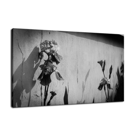Iris on Wall in Black and White Nature / Floral Photo Fine Art Canvas Wall Art Prints