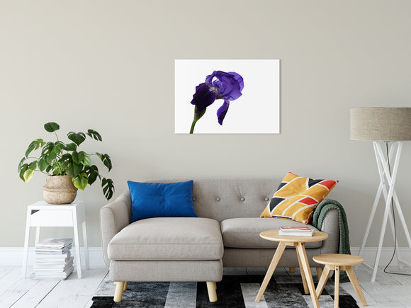Floral Nature Photograph Iris On White - Fine Art Canvas - Home Decor Unframed Wall Art Prints