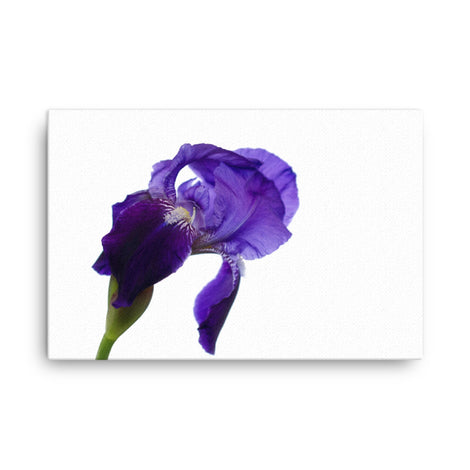 Iris On White Floral Nature Canvas Wall Art Prints