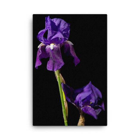 Iris on Black Floral Nature Canvas Wall Art Prints