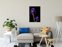 "Iris on Black Nature / Floral Photo Fine Art Canvas Wall Art Prints 24"" x 36"" / Fine Art Canvas - PIPAFINEART"
