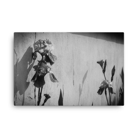 Iris on Wall Black and White Floral Nature Canvas Wall Art Prints
