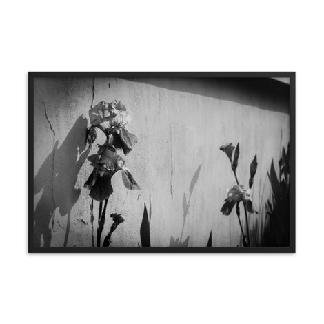 Iris on Wall Black and White Floral Nature Photo Framed Wall Art Print