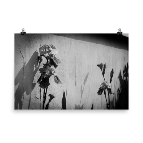 Iris on Wall Black and White Floral Nature Photo Loose Unframed Wall Art Prints