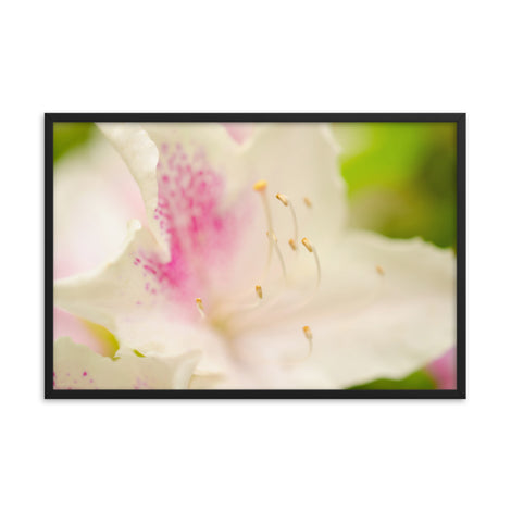 Japanese Azalea Floral Nature Photo Framed Wall Art Print