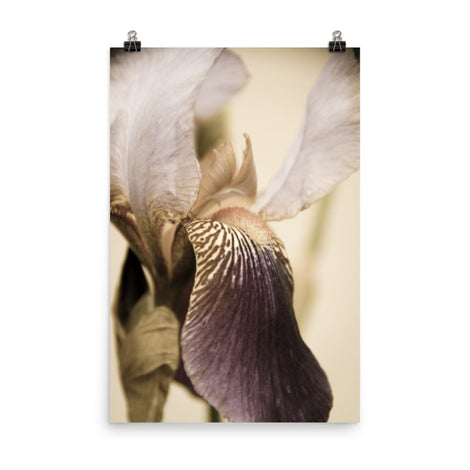 Japanese Iris Delight Aged Floral Nature Photo Loose Unframed Wall Art Prints