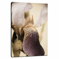 Japanese Iris Delight Aged Nature / Floral Photo Fine Art & Unframed Wall Art Prints - PIPAFINEART