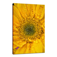 Joyful Color Nature / Floral Photo Fine Art Canvas Wall Art Prints  - PIPAFINEART