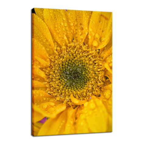 Joyful Color Nature / Floral Photo Fine Art Canvas Wall Art Prints