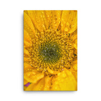Joyful Color Floral Nature Canvas Wall Art Prints  - PIPAFINEART