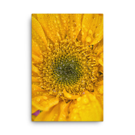Joyful Color Floral Nature Canvas Wall Art Prints