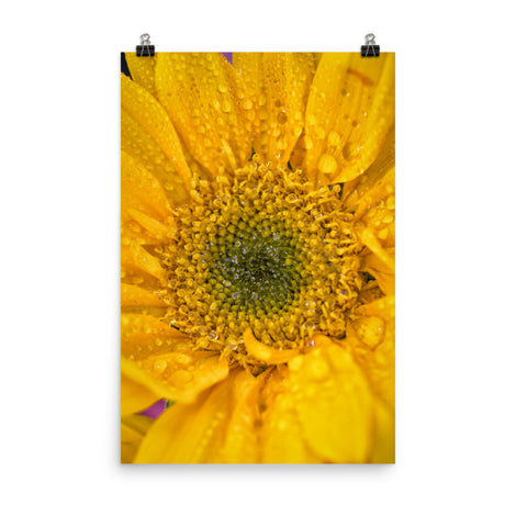 Joyful Color Floral Nature Photo Loose Unframed Wall Art Prints