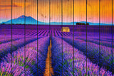 Faux Wood Lavender Fields and Sunset Fine Art Canvas Wall Art Prints - Rural / Farmhouse / Country Style Landscape Scene