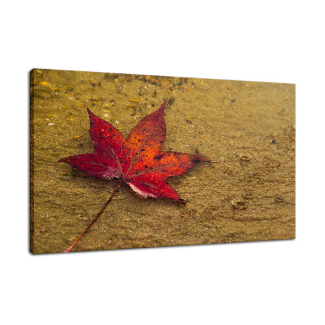 Leaf in the Rain Botanical / Nature Photo Fine Art Canvas Wall Art Prints