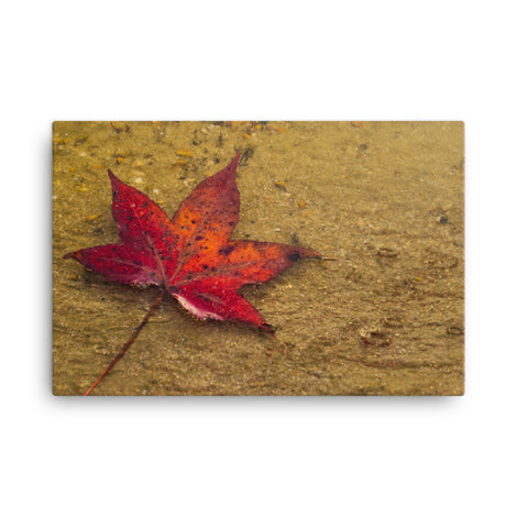Leaf in the Rain Botanical Nature Canvas Wall Art Prints